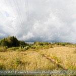 Voimalinjan jalustalta kohti viljelyspalstoja. Kuva: Tuomas Heinonen