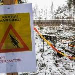Puiden kaatoa Tiistilän metsässä ja muuta päivitystä – Muutosraportti 45/16