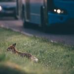Varovaisesti liikenteessä - Kuva: Tuomas Heinonen