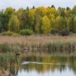 Suomenojan ruskaa - Kuva: Paul Stevens
