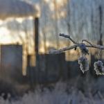 Aamu - Kuva Tommi Heinonen