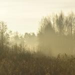 Sumuinen tulvaniitty - Kuva: Tommi Heinonen