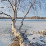 Kuuran ja lumen ohut peitto - Kuva Jukka Ranta