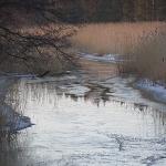 Finnoonpuro, jäässä, vain jään pinnalla vettä. Kuva: Esa Mälkönen