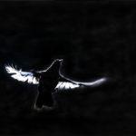 Mustarastaan silhuetti - Kuva: Esa Mälkönen