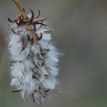 Halava syksyllä. Kuva: Jukka Ranta