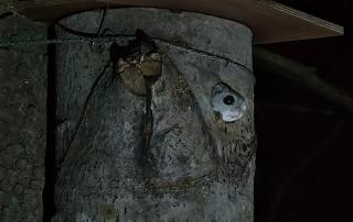 Liito-oravan kurkistus. Kuva: Esa Mälkönen