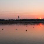 Lokit auringonlaskussa -Kuva Paul Stevens