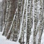 Lunta rungoissa -Tommi Heinonen