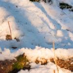 Metsämyyrä_Kuva Paul Stevens