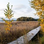 Pirisaari ruska - Kuva Paul Stevens