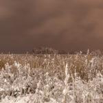 Pirisaari-1 - Kuva Paul Stevens