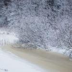 Puro jäässä - kuva Timo Leppäharju