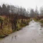 Sadetta - Kuva: Tommi Heinonen