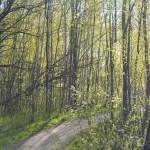 Alkukesän kepeä vihreys - Kuva: Tommi Heinonen