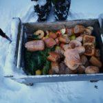 Sorkkaeläinen ruokaa, myös vihanneksia - kuva Timo Leppäharju