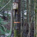 Tiistilän metsän liito-oravan pönttö - Kuva Jukka Ranta