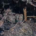 Varovainen metsämyyrä - Paul Stevens