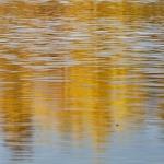 Kultaisia heijastuksia - Kuva: Jukka Ranta