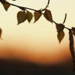 Koleus hidasti kevättä – Viikko 18/14