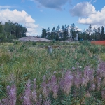 Finnoon osayleiskaava lainvoimainen – Muutosraportti 32/18