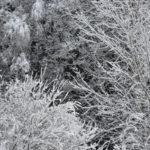 Lunta - Kuva Tommi Heinonen