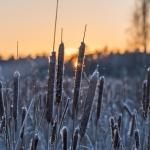 Altaat jäätyivät – Viikot 47-48/2018
