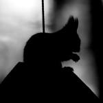 Orava-akrobatiaa - Kuva: Jukka Ranta