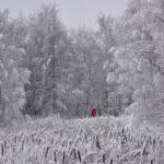 Punatakkinen tyttö - Kuva Tommi Heinonen