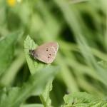 Perhosia on runsaasti - Kuva: Jukka Ranta