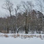 Puron reuna - Kuva: Jukka Ranta