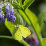 Vielä on perhosia – Viikko 34
