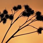 Auringon noustessa - Kuva: Jukka Ranta