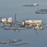 Kun jää on murrettu - Kuva: Tommi Heinonen