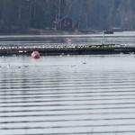Lokkien kokous satamassa - Kuva: Tommi Heinonen