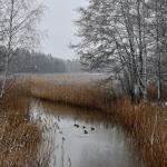 Märkää lunta - Kuva: Tommi Heinonen