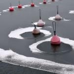 Nuottalahti (satamassa) lauantaina - Kuva: Tommi Heinonen