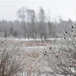 Kuura-aamu - Kuva: Tommi Heinonen
