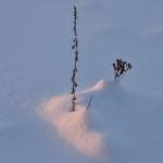 Lumen koristamaa - Kuva: Tommi Heinonen
