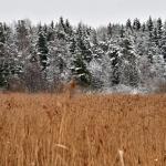 Lumi pysyi puissa päivän verran - Kuva: Tommi Heinonen