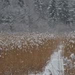 Suomenojan talvea - Kuva: Tommi Heinonen