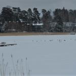 Nuottalahden varikset - Kuva: Tommi Heinonen