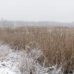 Perjantaina tuprusi märkää lunta - Kuva: Paul Stevens