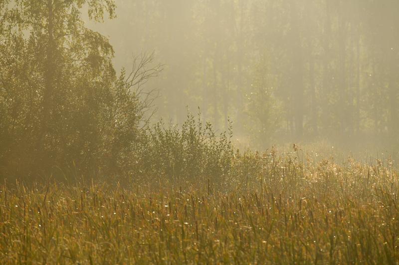 Aamusumu - Kuva Tommi Heinonen