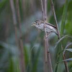 Kerttusia, linnunpoikasia ja lupiinien kukkaloistoa – Viikko 24/2019