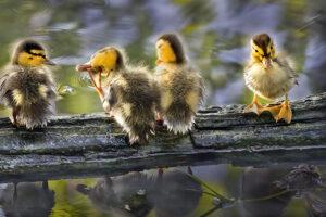 Kesäisiä uutisia mm. lintujen maailmasta – Viikko 22/2021