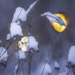 Talventörröttäjiä - Kuva Esa Mälkönen