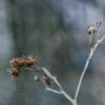 Joulukuun harmaus - Kuva Jukka Ranta