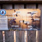 Suomenojan lintutornit saivat opastaulut