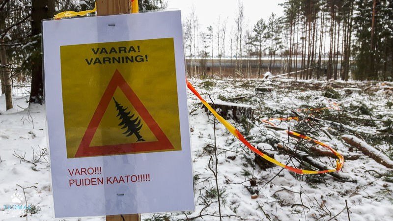 Puiden kaatoa Tiistilän metsässä - Kuva: Tuomas Heinonen